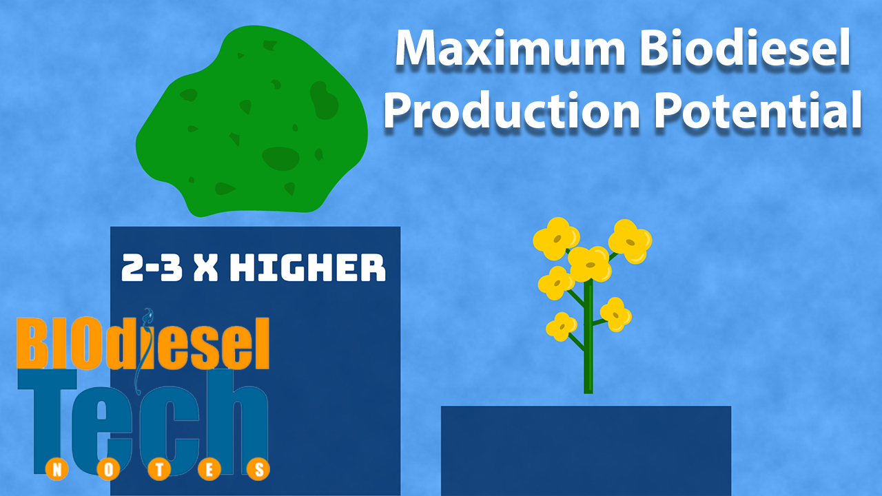 Maximum Potential Biodiesel Production