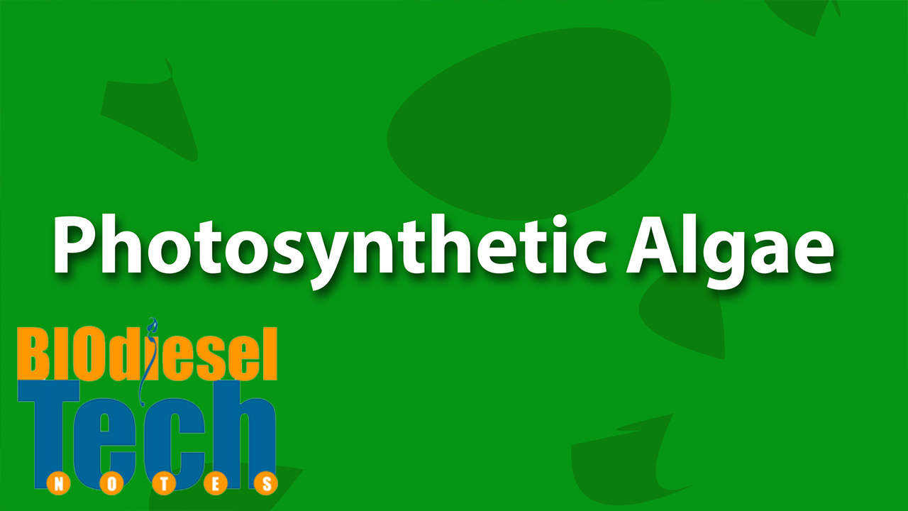 Phospholipids in Algae for Biodiesel Production